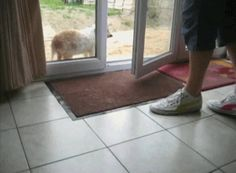 Puppy wipes its feet before entering house