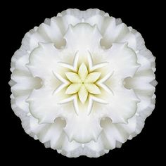 Google Image Result for http://www.phototransformations.com/media/blog/phototransformations/White_Begonia_I_600x600.jpg