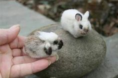 1000 Images About Bunnies On Pinterest Bunnies Cute