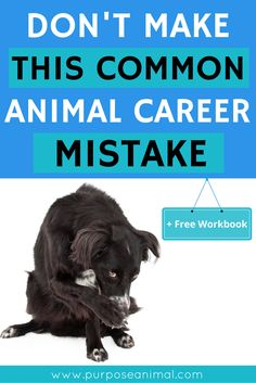 Are you thinking about an animal career? Be sure to check out this blog post where I share ONE BIG MISTAKE I made when trying to decide on my dream ANIMAL CAREER. (Plus Download the FREE Animal Careers Workbook today!)