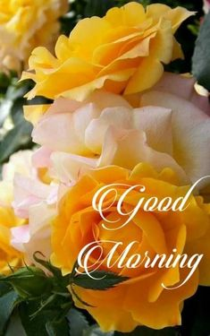 Good morning wishes Good Morning Wishes Quotes, Good Morning Text Messages, Good Morning Dear Friend, Good Morning Thursday, Good Morning Cards, Morning Morning, Good Morning Gif, Good Morning Picture, Morning Greeting