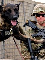 MilitaryDogs