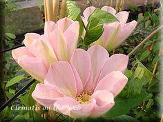 Nice Jeanne us Pink