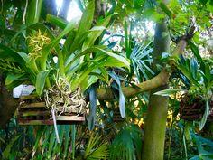 Marraskuuta pakoon: Turun yliopiston kasvitieteellinen puutarha Plants, Plant Decor, Plant, Planets