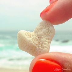 sea coral in the shape of a heart