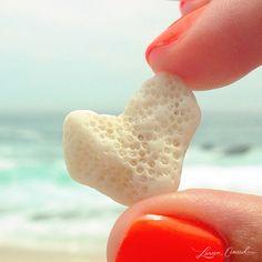 my heart belongs to the ocean...