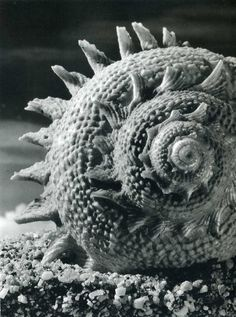 'Forms and Designs of the Sea by Andreas Feininger' Natural Structures, Natural Forms, Close Up Art, Karl Blossfeldt, Object Photography, Texture Photography, Vintage Photography, Black And White Beach, Great Photographers
