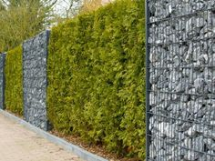 Garten Gabions and hedge as a privacy screen combination The Right Stuff for Your Home Office Are yo Backyard Fences, Garden Fencing, Backyard Landscaping, Landscaping Ideas, Unique Gardens, Back Gardens, Gabion Wall, Gabion Fence Ideas, Stone Fence