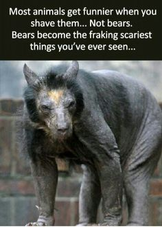 That.... That's a bear...? It's nightmare fuel.