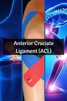 What is the Anterior Cruciate Ligament (ACL)? Acl Ligament, Anterior Cruciate Ligament, Fabric Strips