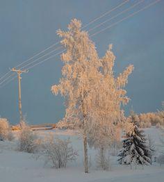 In Lapland in Finland. Pure, white snow!  Cabins and Activities in Saariselkä http://www.saariselka.com