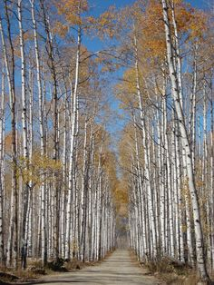 Aspen Alley - Wyoming