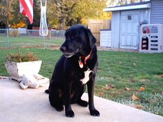 Parents Name: Harvey and Cindy Pets Name: Lily Pet Species: Dog Pets Favorite thing to do: Playing ball and frisbee, watching over grand kids. Eulogy: We got our Lily in 1998, a friend called and a...