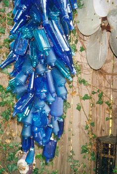 blue bottles