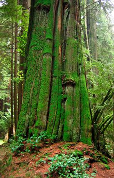 Tryon Creek State Park is a 670-acre forest located on the boundaries of Portland and Lake Oswego.