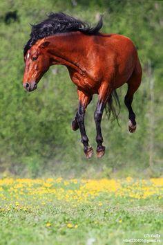 WHEEEEEEEEEEEEEEEEE i believe i can fly!