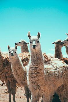 Pampa rugs. #animal #fauna