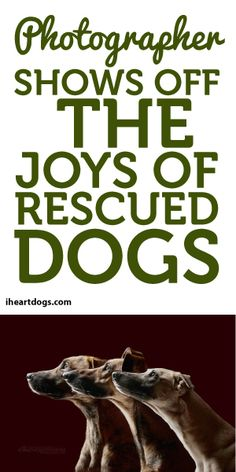 Photographer Shows Off The Joys Rescued Dogs!