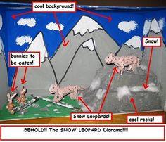 Snow Leopard diorama