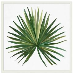 Pottery Barn Tropic Palm Framed Print ($299) ❤ liked on Polyvore featuring home, home decor, wall art, tropical home decor, tropical wall art, tropical paintings, giclee painting and pottery barn wall art
