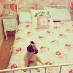 girly room & pug puppy