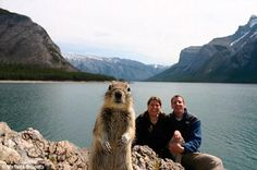 28 of the Best Animal Photobombs of All Time | Pleated-Jeans.com