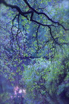 'IM PARK' von Ivonne Wentzler bei artflakes.com als Poster oder Kunstdruck Watercolor Trees, Watercolor Landscape, Abstract Landscape, Landscape Paintings, Watercolor Paintings, Landscapes, Tree Art, Art Pictures, Canvas Art