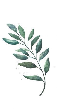 Watercolor - Leaf on Behance