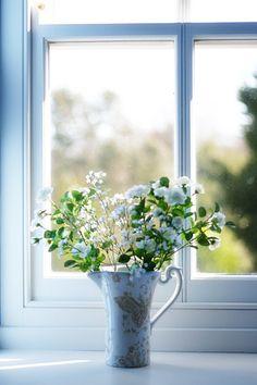 pretty white flowers in the window