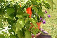 Gartentipps: Urbane Gärten, urbane Landwirtschaft - Mitmachen erwünscht!