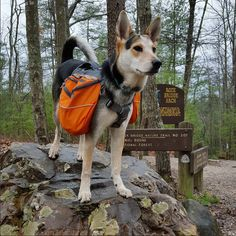 Approach Pack™: The Ruffwear Approach Pack™ is an everyday pack designed for long day hikes and short overnight trips, offering exceptional performance, fit and functionality. Featuring an integrated harness, lightweight materials and a streamlined design, the Approach Pack™ allows dogs to carry their own trail necessities, giving them a job and a motivation to explore.