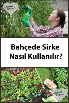 Apple Cider, Gardening Tips, Aloe, Diy And Crafts, Backyard, Organic, Health, Flowers, Outdoor