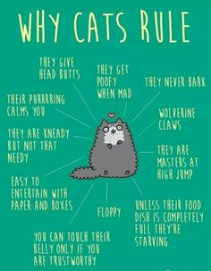 Why Cats Rule.
