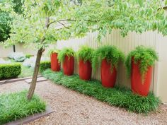 Asparagus Ferns in Bold #red #containers