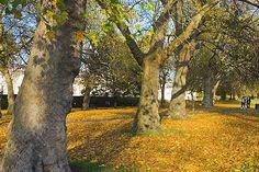 Greenwich Park in autumn.