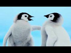 Cute Penguins, Birds, Animals, Wallpaper Backgrounds, Desktop, Phone, Animales, Telephone, Animaux