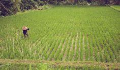 INDONESIA on Behance
