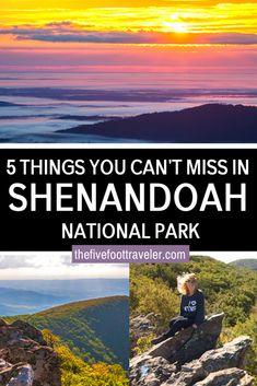 5 Beautiful Things To Do In Shenandoah National Park East Coast Road Trip, Us Road Trip, Usa Travel Guide, Travel Usa, Budget Travel, Travel Guides, Travel Tips, Hiking In Virginia, Virginia Beach