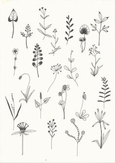 Stickmuster, Muster, Blume – # pattern – New Tattoo Models - Pflanzen Ideen Leaf Drawing, Floral Drawing, Plant Drawing, Botanical Line Drawing, Botanical Drawings, Mini Tattoos, New Tattoos, Small Tattoos, Embroidery Flowers Pattern