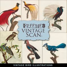 Nueva Freebies Kit de Ejemplos del vintage