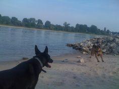 Ausflug mit dem Hunde Rudel nach Meerbusch Langst Kierst nahe der Fähre zu Düsseldorf Kaiserswerth - Toben und Hundepfoten im Sand