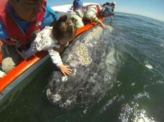 Mexico's friendly whales: Go ahead and pet them - The Boston Globe