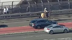 Man rides horse across Sydney Harbour Bridge to protest land clearing laws