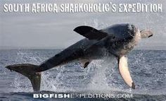 South Africa Sharkoholic Expedition