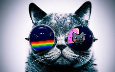 Cool Macro Nyan Cat Glasses Silk Cloth Poster 40 x Nyan Cat, Wallpaper Gatos, Cute Cat Wallpaper, White Wallpaper, Hipsters, Cheshire Cat Wallpaper, Rusty Spotted Cat, Wild Cat Species, Black Footed Cat
