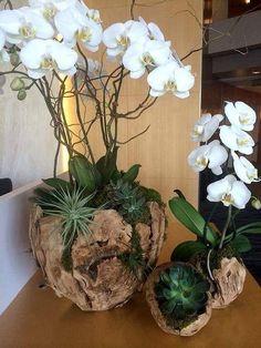 Flowers by colorburst orchids succulents Arrangements Ikebana, Orchid Flower Arrangements, Orchid Planters, Orchid Pot, Orchids Garden, Succulents Garden, Garden Plants, Indoor Plants, House Plants