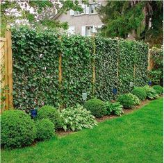 20 Green Fence Designs, Plants to Beautify Garden Design and Yard Landscaping is part of garden Design Plants - Climbing plants are popular choices for garden design, porch and front yard decorating, arbors and green fence design Privacy Fence Landscaping, Privacy Fence Designs, Privacy Plants, Garden Privacy, Garden Shrubs, Diy Garden, Backyard Fences, Backyard Landscaping, Landscaping Ideas