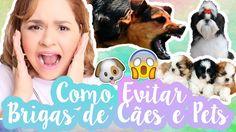 Como Evitar e Prevenir Brigas Entre Cachorros e Animais | 7 Dicas Infalí...