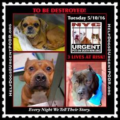 "5/10 Please Share! SUPER URGENT 3BEAUTIFUL LIVES OF DOGS TO SAVE 5/10TO BE DESTROYED STARTING 12NOON PLEASE SAVE US WE ONLY HAVE A FEW MINS / HOURS TO LIVE BEFORE WE GO TO DOGGY HEAVEN THANK YOU PLEASE REPIN AND SHARE THIS INFORMATION  TIME IS CRITICAL THANK YOU IRISH : . Please share! The shelter closes at 8pm. Go to the ACC website( http:/www.nycacc.org/PublicAtRisk.htm) ASAP to adopt a PUBLIC LIST dog (noted with a ""P"" on their profile) and/or work with a rescue group if you can…"
