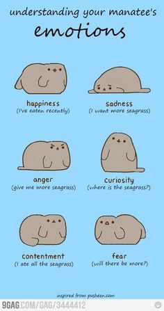of a manatee Emotions of a manatee - posting to dogs since my lab has been called a Manatee by his vet's office since he was a puppy!Ever Since Ever Since may refer to: Funny Animals, Cute Animals, Baby Animals, Sea Cow, Comic, Marine Biology, Dog Care Tips, Marine Life, Spirit Animal